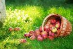 Число яблочного спаса – Какого числа Яблочный Спас в2018 году